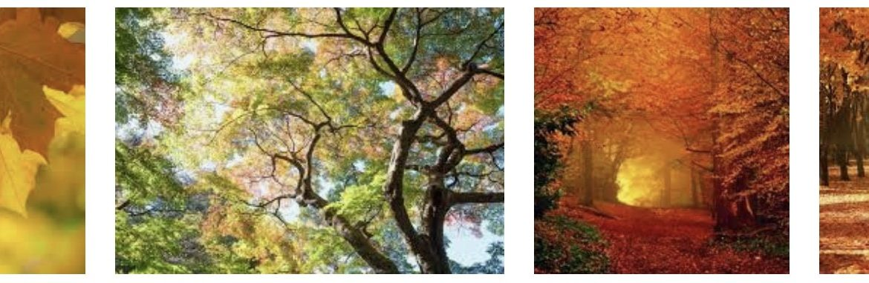 Herfstequinox: wat is het en wat merk je ervan?